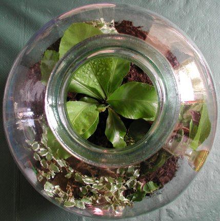 BIJLAGEDETAILS Ecotuintje-in-fles-flessentuin-planten-workshop-groningen-duurzaam-urban-heart