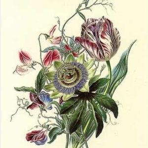 botanisch-tekenen-workshop-groningen-zwolle-deventer-leeuwarden-uitje-urbanheart